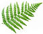 Ferns Icon