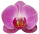 Orchids Icon